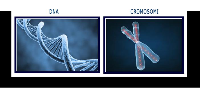 dna e cromosomi