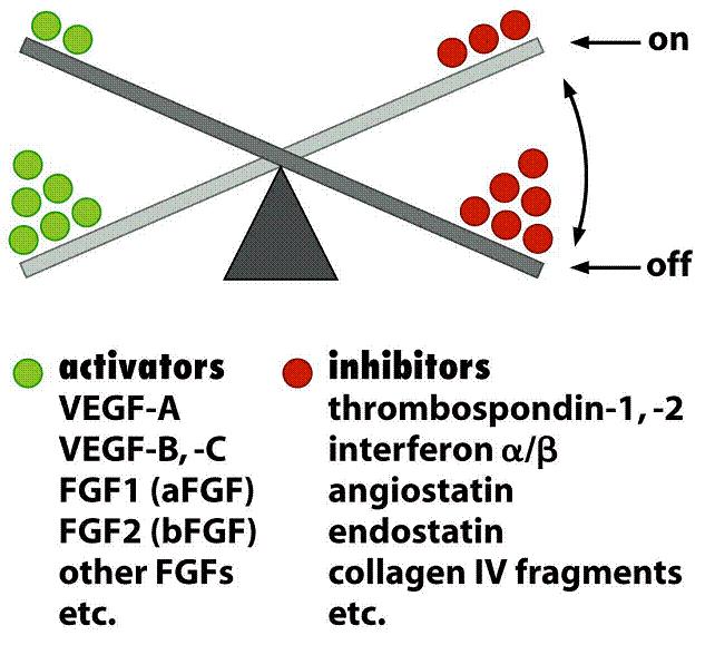angiogenesi 1